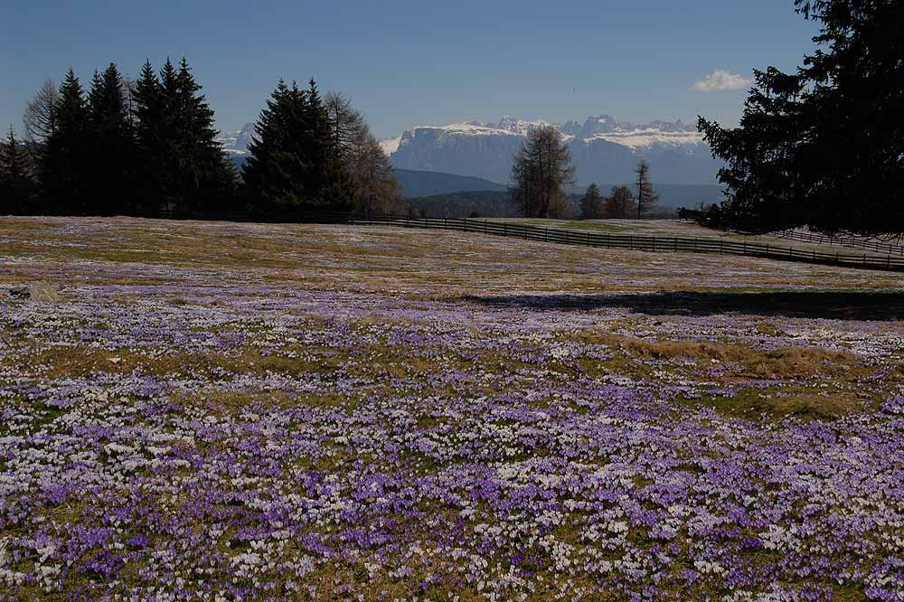 Experience the spring blossom in South Tyrol